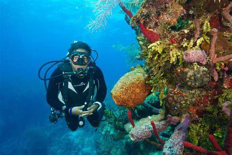 Underwater Dive - scuba ventures scuba diving shreveport la