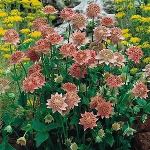 Plantes D Ombre Extérieur : quelques liens utiles ~ Melissatoandfro.com Idées de Décoration