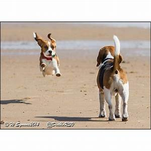 153 best My Beagles images on Pinterest   Beagle puppy ...