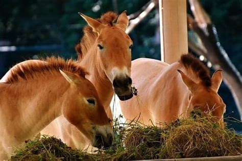 horse horses facts digestion feed know every human owner foods needs support ihearthorses pug sad animals food brand humans healthy