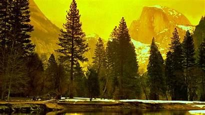 Yellow Landscape Nature Wallpapers Desktop Px Trees