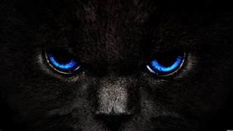 black cats with blue animals zoo park black cat wallpapers blue cat