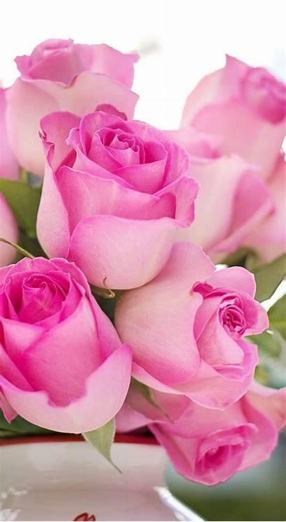 Flowers Roses Pink Romantic Romance Rose Flower