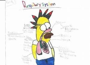 Mr Schriner Science  Homer Respiratory Mindmap
