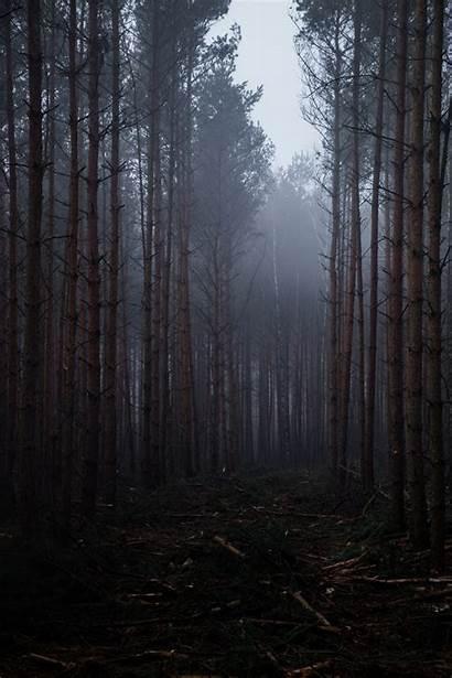 Portrait Nature Display Forest Landscape Wallpapers Desktop