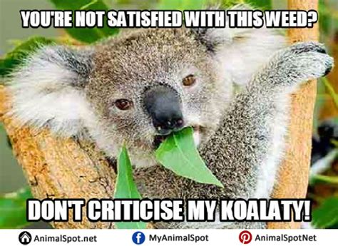Koala Meme - koala memes