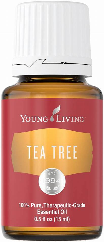 Living Young Oil Tea Tree Essential January