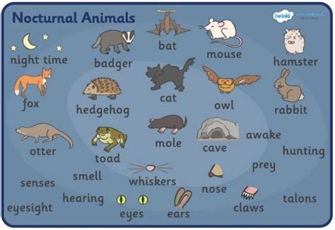 Nocturnal Animals English Is Cool