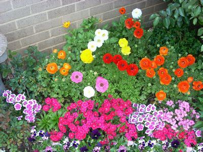 winter flowers  grow    texas