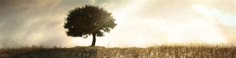 symbole arbre 201 ditions ucm