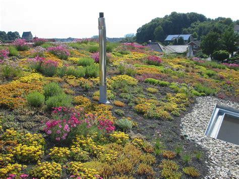 Dachbegruenung Pflanzen Fuer Die Extensivbegruenung by Dachbegr 252 Nung Gartenanlage Beil Garten Und
