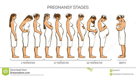 women pregnancy stages stock vector illustration
