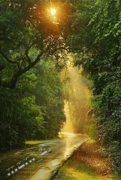 Natural Scenery Nature Landscape Gifs Amazing Forest