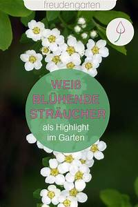Weiß Blühende Stauden : wei bl hende str ucher in 2020 wei bl hende str ucher winterharte stauden mond garten ~ Watch28wear.com Haus und Dekorationen