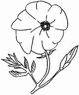 Poppy Coloring California Flower Pages Amazing Torkoal Pokemon Poppies Drawings Sheets Template Sketch sketch template