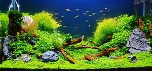 Aquarium Einrichten Beispiele : unterwasserwelt im wohnzimmer au ergew hnliche aquarien f r individuelle anspr che my fish ~ Frokenaadalensverden.com Haus und Dekorationen