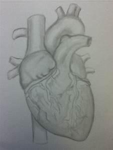 Human Heart sketch by NightMareBabe14 on DeviantArt