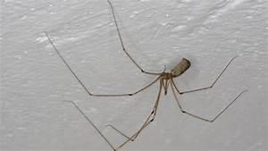 Spinnen Fernhalten Wohnung : spinnen heimische spinnenarten spinnen insekten und spinnentiere natur planet wissen ~ Whattoseeinmadrid.com Haus und Dekorationen