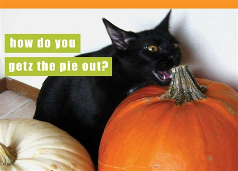 Funny Picture Clip Funny Cat Halloween Pet Photo Contest