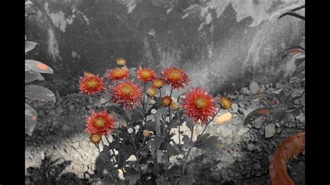 selective color photoshop selective color nikon d5100 selective color photography