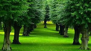 Nature, Landscape, Green, Plants, Trees, Grass, Leaves