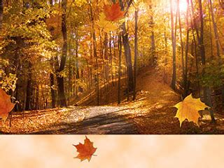 Fall Thanksgiving Wallpaper Free by Thanksgiving Wallpapers Fall Leaves Wallpaper
