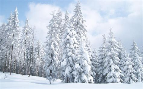 Animated Snowy Wallpaper - snowy trees wallpapers wallpaper cave