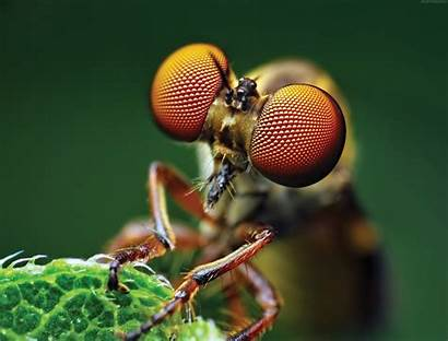 Macro Fly Eye 4k Wallpapers Insects Resolution