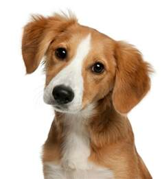 Dog Breeds as Puppies