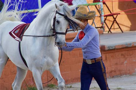 horse mexican lady equestrian suitor finale bow such thing each exceptionally prepared handler liberty loved being she work