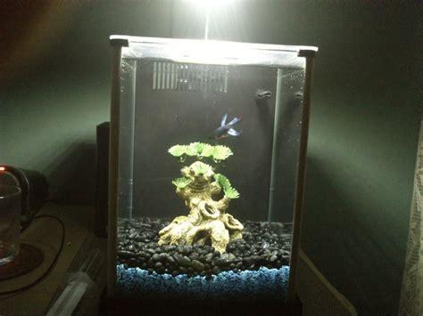 am 233 nagement d 233 cor aquarium pour betta