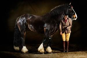 Professional Equestrian Photography | www.imgkid.com - The ...