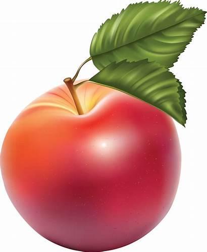 Apple Transparent Clipart Clip Fruit Cliparts Vector