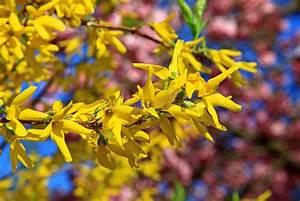 Rosa Blühender Baum Im Frühling : fr hling bl hender baum stockfoto bild von sch nheit ~ Lizthompson.info Haus und Dekorationen