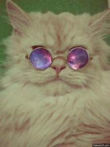 hipster cat outer space gif WiffleGif