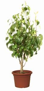 Arbres Fruitiers Nains En Pleine Terre : tout savoir sur les arbres fruitiers nains ~ Premium-room.com Idées de Décoration