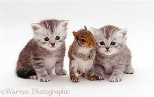 Kittens and Grey Squirrel photo WP26217