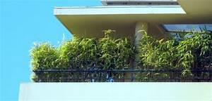 Bambus Als Sichtschutz Im Kübel : bambus kubel sichtsc bambus als sichtschutz im k bel on balkon sichtschutz ~ Frokenaadalensverden.com Haus und Dekorationen