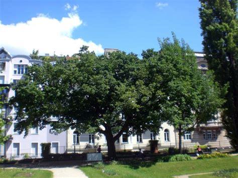 Botanischer Garten Der Universität Wien Wien österreich by Europ 228 Ische Hopfenbuche Im Botanischer Garten Der