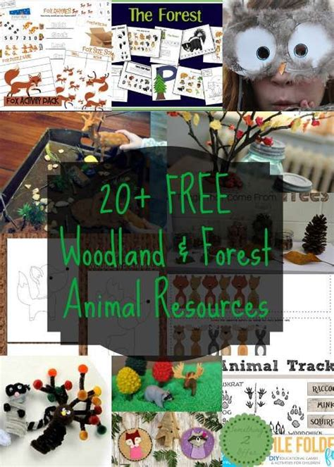 101 best images about forest animals on foxes 877 | 33298e4490991a4748c3c7792819db10 forest school activities activities for toddlers