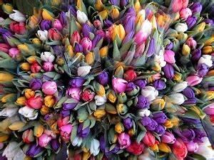 Tulpenzwiebeln Im Frühjahr Pflanzen : tulpen f rs n chste fr hjahr pflanzen garten garten tipps f r hobbyg rtner ~ A.2002-acura-tl-radio.info Haus und Dekorationen