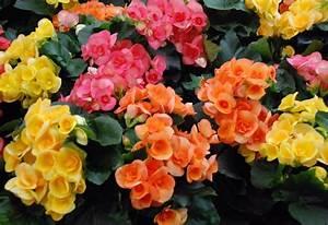 Blumen Für Schattigen Balkon : ro liny kwitn ce jesieni projektowanie ogrod w ogr d ~ Orissabook.com Haus und Dekorationen