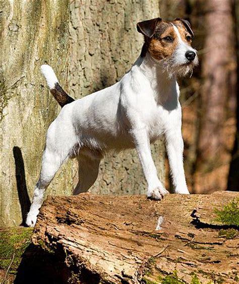 welcher hund passt zu mir grosser oder kleiner hund