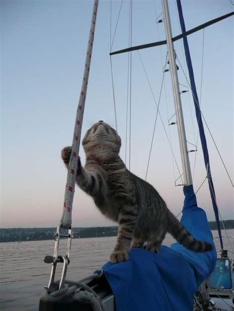 sailboat works  cats animals adventure cat