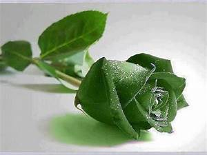 Green Rose Wallpapers HD Pictures – One HD Wallpaper ...