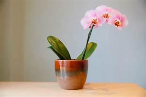 Künstliche Orchideen Im Topf : orchideen im topf so pflegen sie sie richtig ~ Watch28wear.com Haus und Dekorationen
