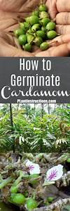 How To Germinate Cardamom