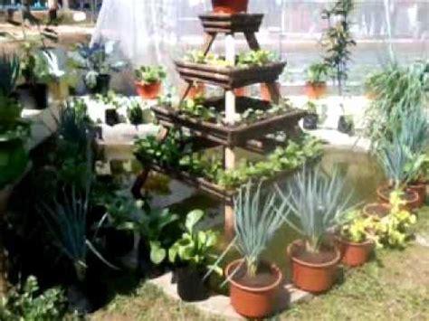 membuat kebun sayur  lahan sempit desain rumah