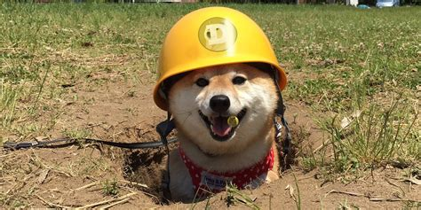 Dogecoin miner, 2013 [colorised] : dogecoin