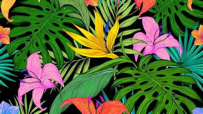 Tropical Flowers Pattern Leaves Wallpapers Palm 4k